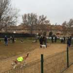 A lo largo de este año, el Ayuntamiento creará tres nuevos parques de ocio para perros