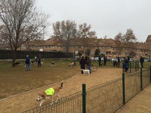El ayuntamiento puede multar hasta con 1.500 euros por no recoger los excrementos del perro