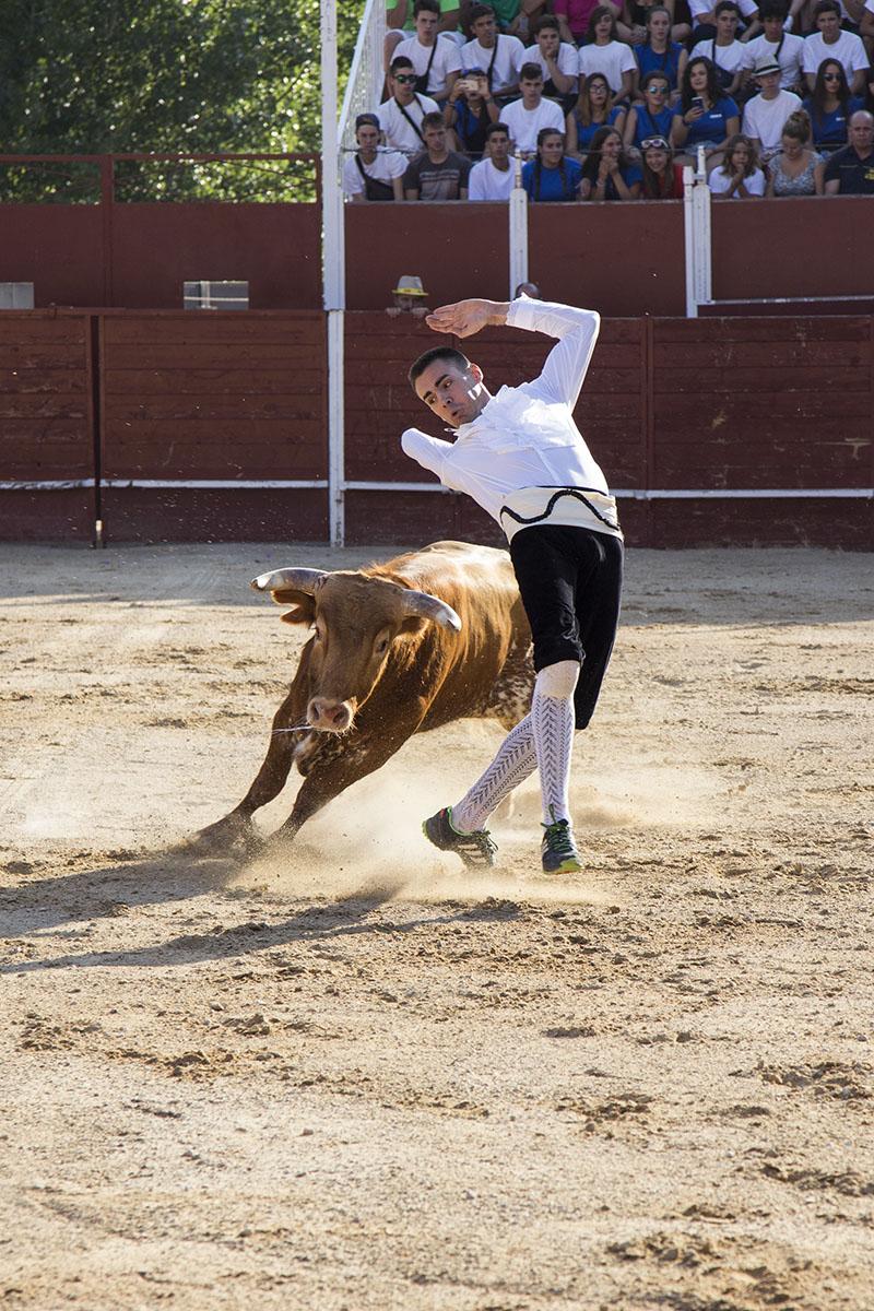 recuero-toros-trillo