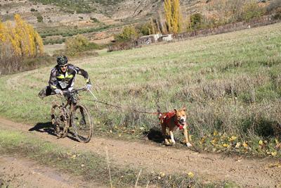 Canicross Pareja (Bikejoring)