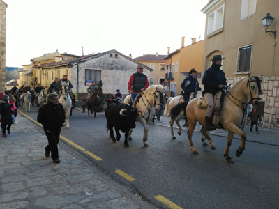 Un toro fue la sorpresa de la bendición de animales en Brihuega