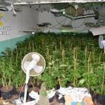 Un detenido por cultivar marihuana en Fuentenovilla
