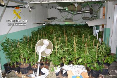 En el registro de este inmueble, llevado a cabo con autorización judicial, la Guardia Civil incautó 1.027 plantas de cannabis sativa,