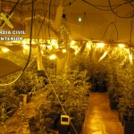 Detenido en Chiloeches con cerca de 800 plantas de marihuana en un chalé