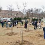 Plantados 100 nuevos árboles del proyecto 'En Azuqueca, nace un bebé, nace un árbol'