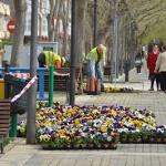 Más de 4.000 flores para arrancar la campaña de plantación de primavera