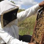 Durante la celebración de la Feria Apícola puedes iniciarte en la apicultura