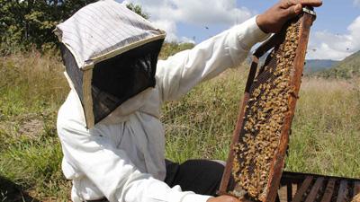 Durante la feria se va a realizar un curso de iniciación a la apicultura