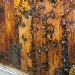 La miel se vuelve a apoderar de Marchamalo…