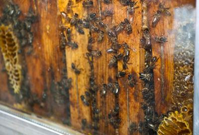 Panal de rica miel