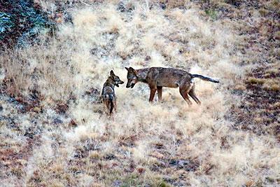 Foto: Andoni Canela.- WWF