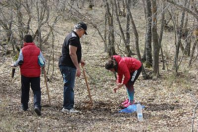 El ayuntamiento de Yebes está haciendo una plantación de fresnos y encinas en el bosque de Valdenazar en Valdeluz