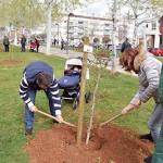 Azuqueca conmemora el Día del Libro con una plantación en la avenida de Los Escritores