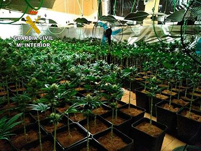 La Guardia Civil ha incautado 1.865 plantas de marihuana