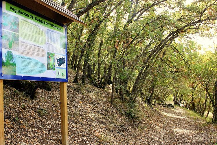Bosque de Valdenazar, recientemente premiado