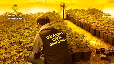 Se han incautado 1.424 plantas de cannabis sativa y se ha desmantelado una plantación en una vivienda unifamiliar en Albalate de Zorita