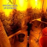 Un detenido y otro investigado en Pioz por cultivar marihuana