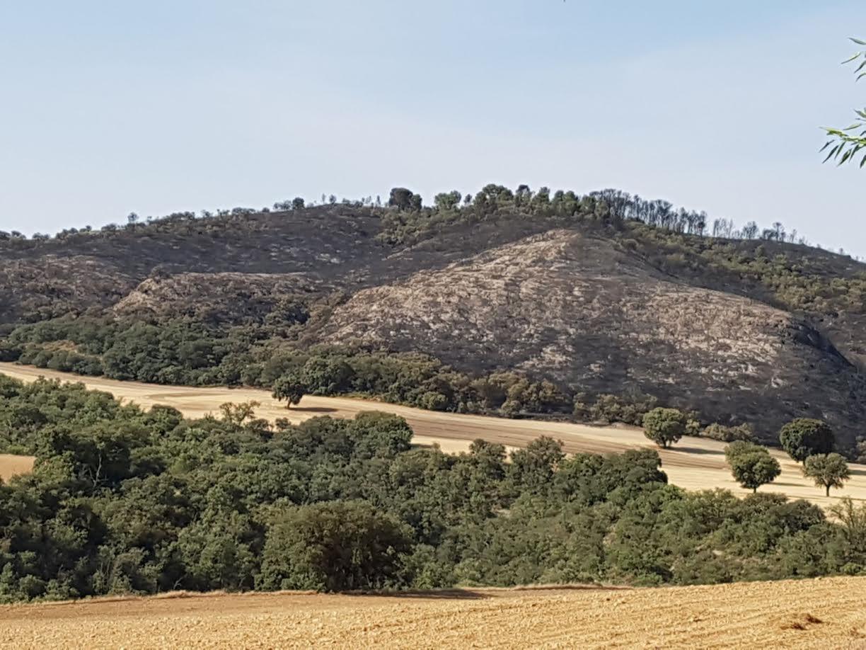 El incendio de Almoquera aun permanece sin ser extinguido