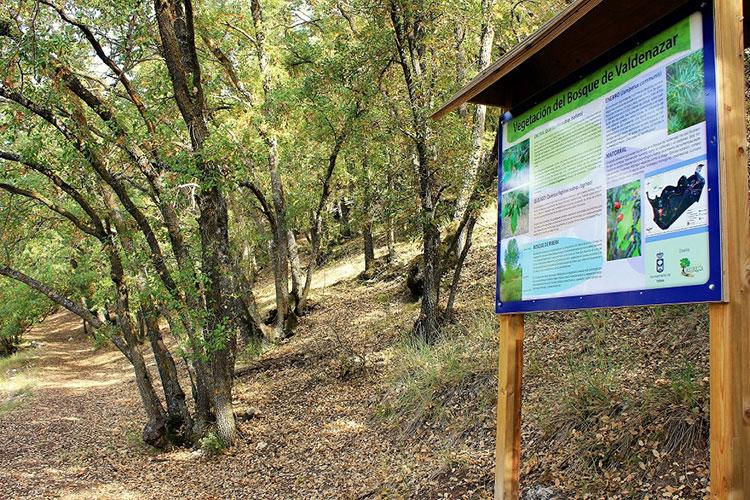 Este sábado visita al Bosque de Valdenazar