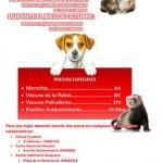 Este lunes, empieza la campaña municipal de vacunación e identificación de mascotas