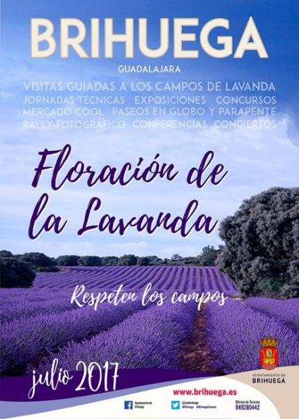 brihuega_lavanda2017