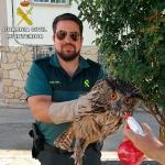 La Guardia Civil recupera un Búho Real en Sacecorbo