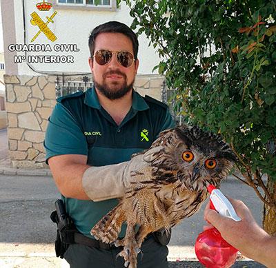 El búho ha sido trasladado al min zoo de Guadalajara