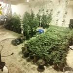 La Guardia Civil detiene a una persona por cultivar marihuana en Uceda