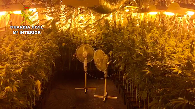 La Guardia Civil ha incautado 413 plantas de cannabis sativa en Yebes