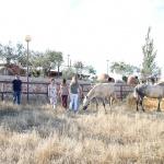 Comienza el programa Impulsa Mujer Rural de la Diputación