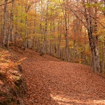 Una docena de propuestas para conocer los parques naturales de la provincia