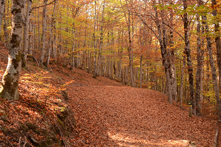 El Hayedo de Tejera Negra en Cantalojas, ya es espacio protegido por la UNESCO