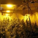Detenidas dos personas por cultivar marihuana en Torrejón del Rey