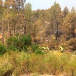 El incendio de Yeste se da por perimetrado