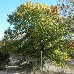 Quedan pocos días para adherirse al proyecto de inventariado de árboles singulares