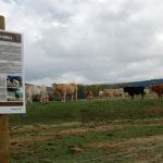 El futuro de la ganadería en la Sierra