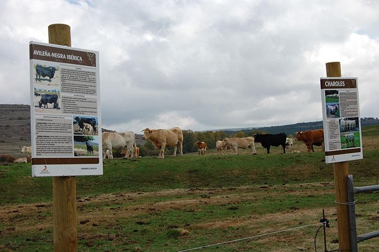 La Sierra aglutina la mayor cabaña ganadera de la provincia (Foto APAG)