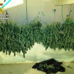 Detenidas cuatro personas por cultivo de marihuana en Torrejón del Rey