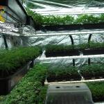 La Guardia Civil detiene a una persona por cultivar marihuana en El Casar