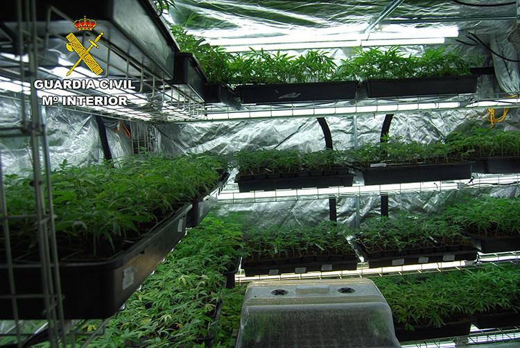 El detenido tenía en su domicilio más de 3000 plantas de marihuena