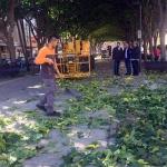 El Ayuntamiento acomete el Plan anual de Poda