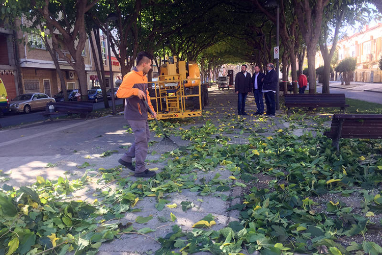 Trabajos de poda en el Bulevar de Las Acacias. Fotografía: Ayuntamiento de Azuqueca