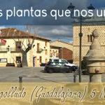 """Cogolludo, una de la localidades participantes en el proyecto """"Las Plantas que nos unen"""""""