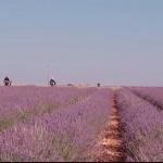 Brihuega, turismo de sensaciones, el vídeo para descubrir sus muchos encantos