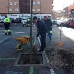 El Ayuntamiento de Guadalajara pretende plantar 1.200 árboles en este año