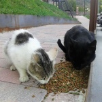 Yebes implanta un plan para controlar los gatos callejeros