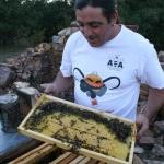 Apicultura en Guadalajara: la asignatura pendiente de la profesionalización