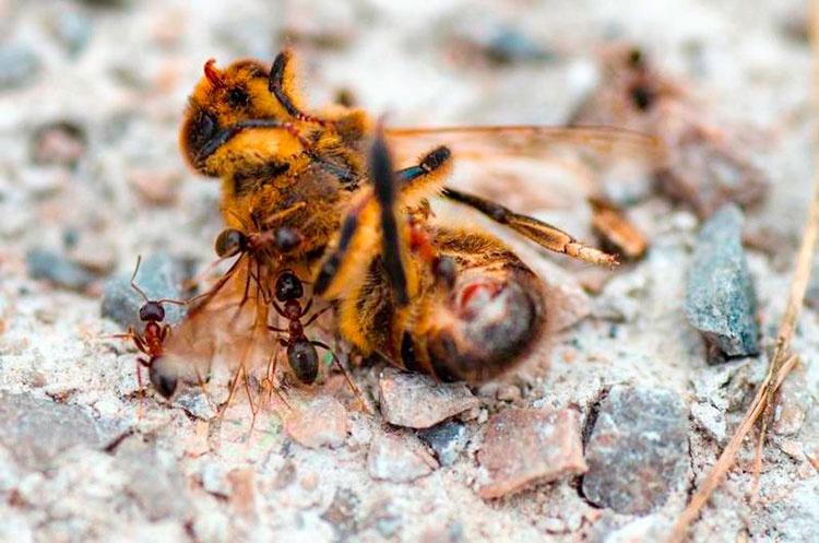 (Foto: Concurso internacional de fotografía apícola de Azuqueca de Henares)