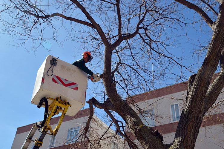 Trabajos de poda en la calle Pobos. Fotografía: Álvaro Díaz Villamil / Ayuntamiento de Azuqueca