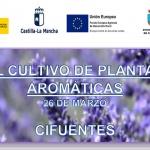 El cultivo de las plantas aromáticas será tratado en Cifuentes